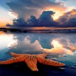 Beauty-starfish
