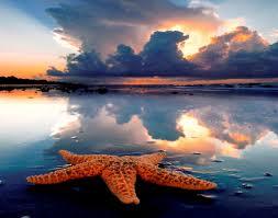 Beauty-starfish